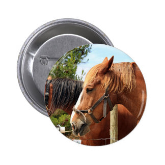 Two draft horses pinback button