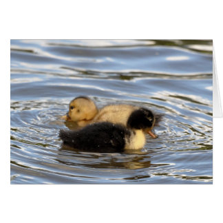 Two Ducklings Card