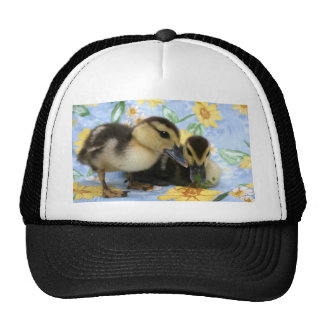 two ducklings one eyeing camera close mesh hats
