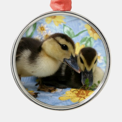 two ducklings one eyeing camera close christmas ornament