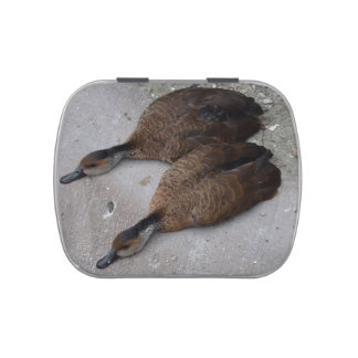 two ducks lying flat from side jelly belly candy tins
