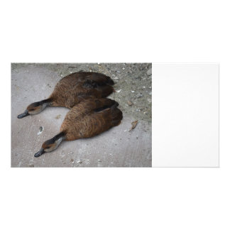 two ducks lying flat from side photo card