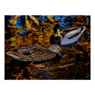 Two Ducks on Pond Photo Art Poster Print