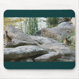 Two Ducks sitting apart Mouse Pad