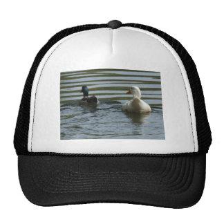 Two Ducks Swimming Trucker Hat