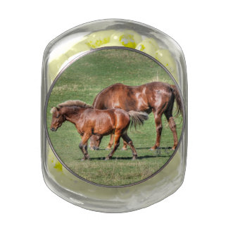 Two Dun Horse Friends in a Grassy Field Photo Glass Jars