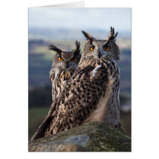 Two Eagle owls - togetherness Card