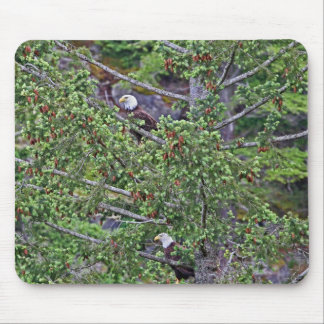 Two Eagles in an Evergreen Tree Mouse Pad