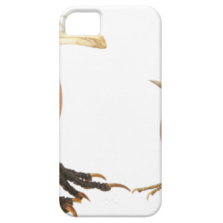 Two eggs as birds with beaks skull and legs iPhone SE/5/5s case