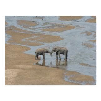Two Elephants Meeting in Stream Postcard