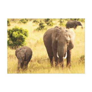 Two elephants walking through the grass ton the fr canvas prints