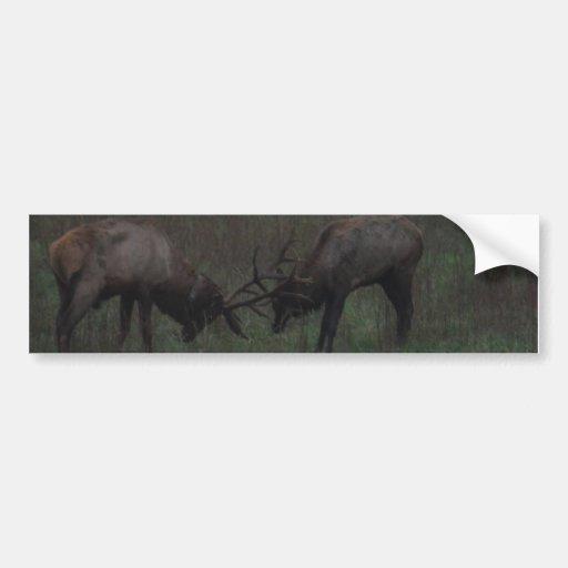 Two Elk  Bulls interlocked in Battle Bumper Stickers