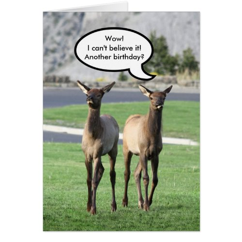 Two Elk Calves Happy Birthday Card