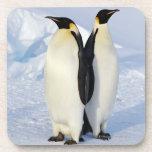 Two Emperor Penguins in Antarctica Beverage Coaster