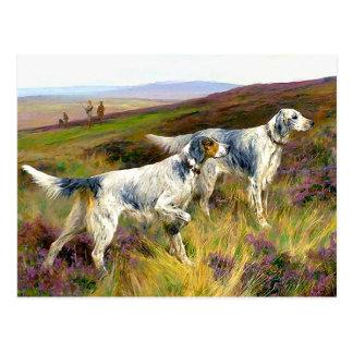 Two English Setters in a Field - Arthur Wardle Postcard