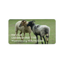 Two ewes label