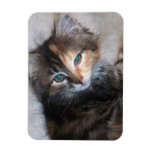 Two faced cat vinyl magnet