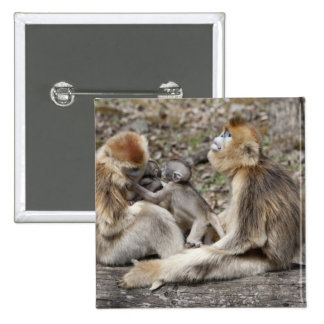 Two female Golden Monkeys with newborns 2 Inch Square Button