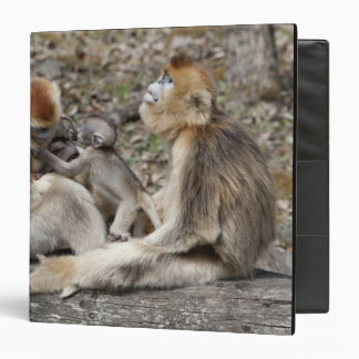 Two female Golden Monkeys with newborns 3 Ring Binders