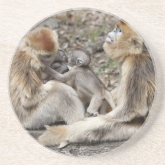 Two female Golden Monkeys with newborns Coaster