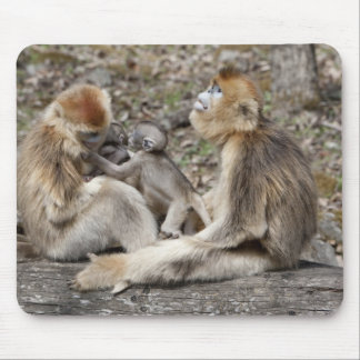 Two female Golden Monkeys with newborns Mouse Pad