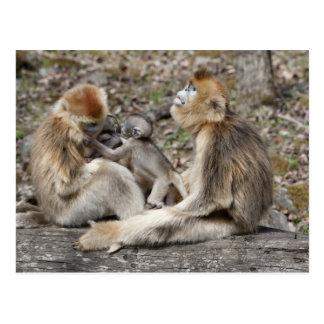 Two female Golden Monkeys with newborns Postcard
