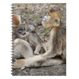 Two female Golden Monkeys with newborns Spiral Notebook