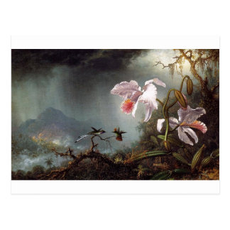 Two Fighting Hummingbirds with Two Orchids by Mart Postcard