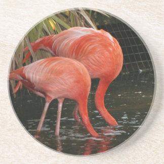Two flamingoes with heads in the water drink coaster