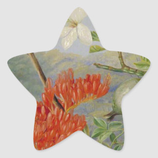 Two Flowering Shrubs of Natal and a Trogon Star Sticker