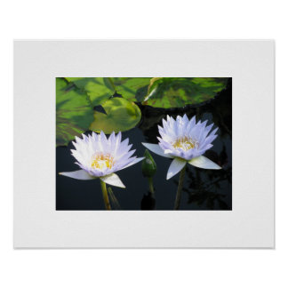 Two Flowers with Lily Pads at Longwood Gardens Poster