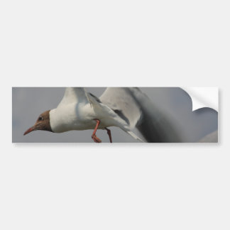 two flying gulls bumper stickers