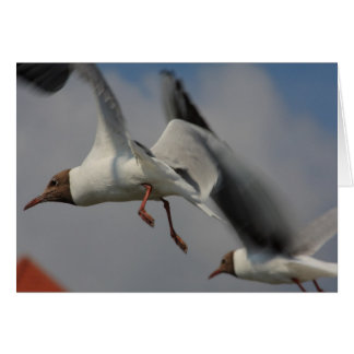 two flying gulls card