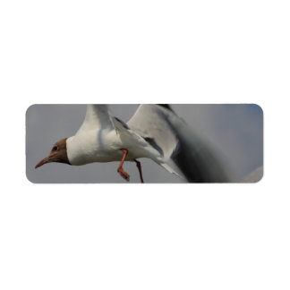 two flying gulls label