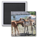 Two Foals Pony Friends Horse-lover Gift Refrigerator Magnets