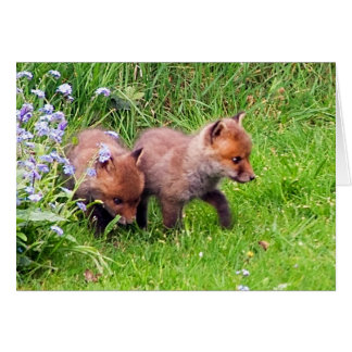 two fox cubs card