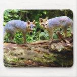 TWO FOX ON A TREE MOUSEPAD