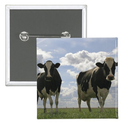 Two Friesian cows 2 Inch Square Button