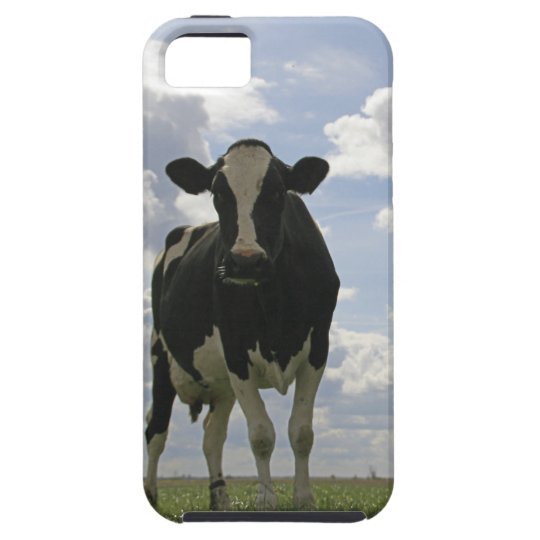 Two Friesian cows iPhone SE/5/5s Case