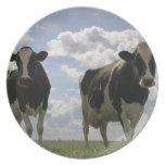 Two Friesian cows Melamine Plate