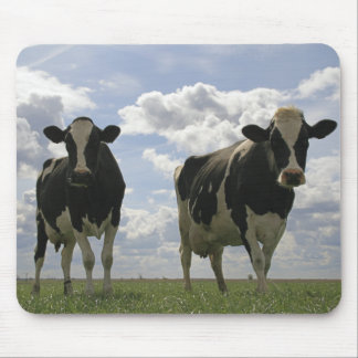 Two Friesian cows Mouse Pad