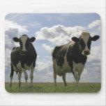 Two Friesian cows Mousepad