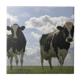 Two Friesian cows Ceramic Tiles