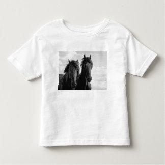 Two Friesian stallions. T-shirt
