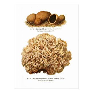 Two fungi post card
