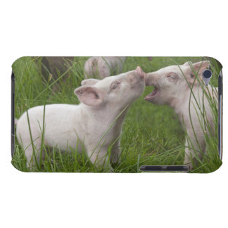Two Funny Cute Playful Piglets Barely There iPod Cover
