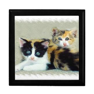 Two Funny Faced Kitties Trinket Box