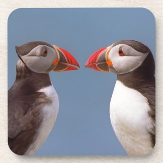 Two funny puffins coaster