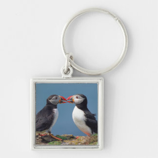 Two funny puffins Silver-Colored square keychain