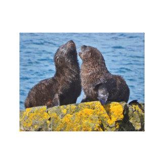 Two Fur Seal Pups Canvas Print